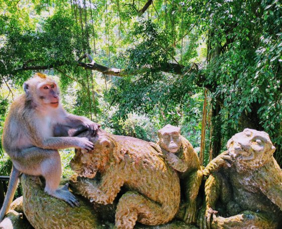 Bali Monkeys at Ubud Monkey Forest