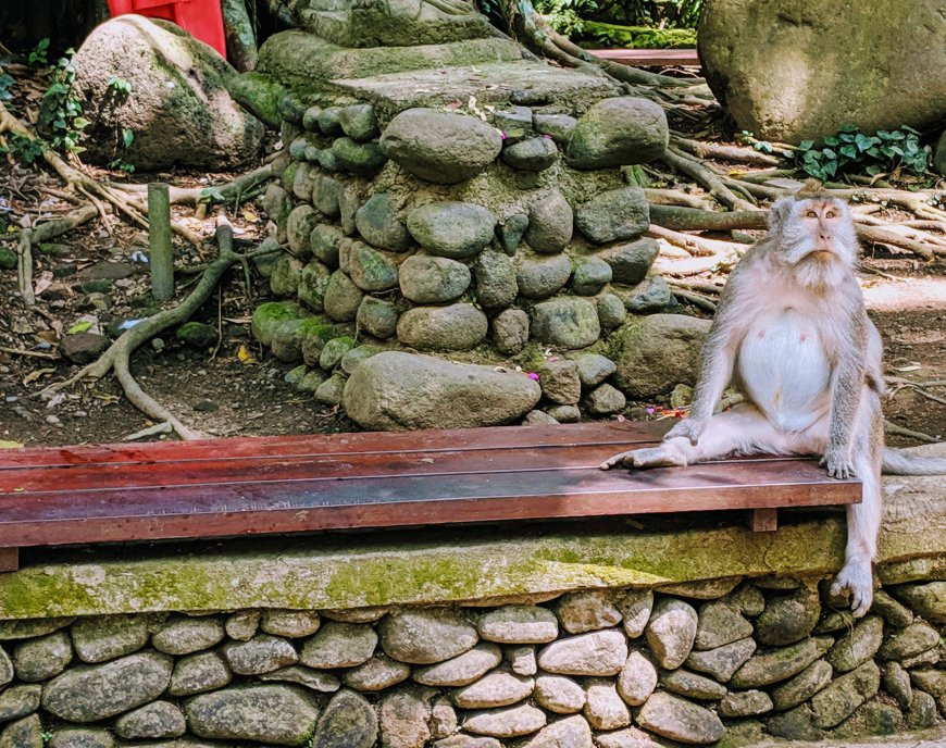 Funny Bali monkey at Ubud Monkey Forest.jpg