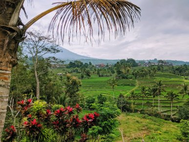 Jatiluwah Rice Terrace in Bali