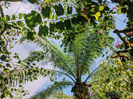 Palm trees at GWK Cultural Park