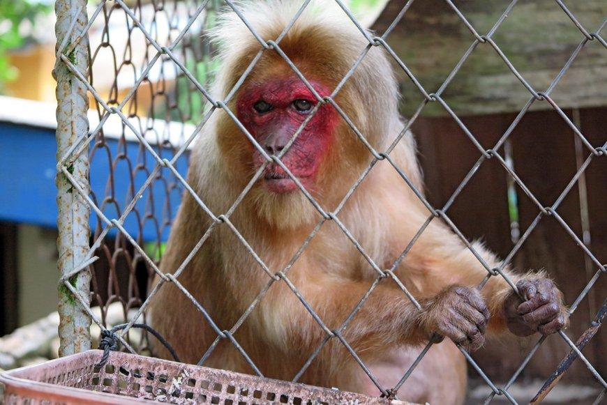 Sad monkey in a spooky resort
