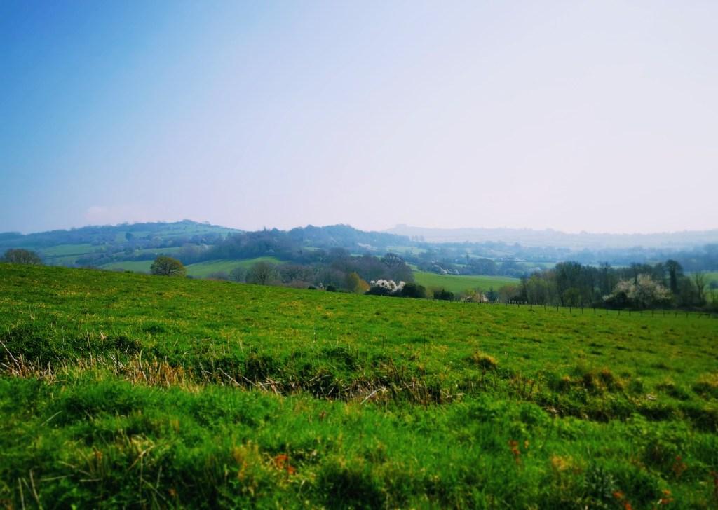 Views from Swineford