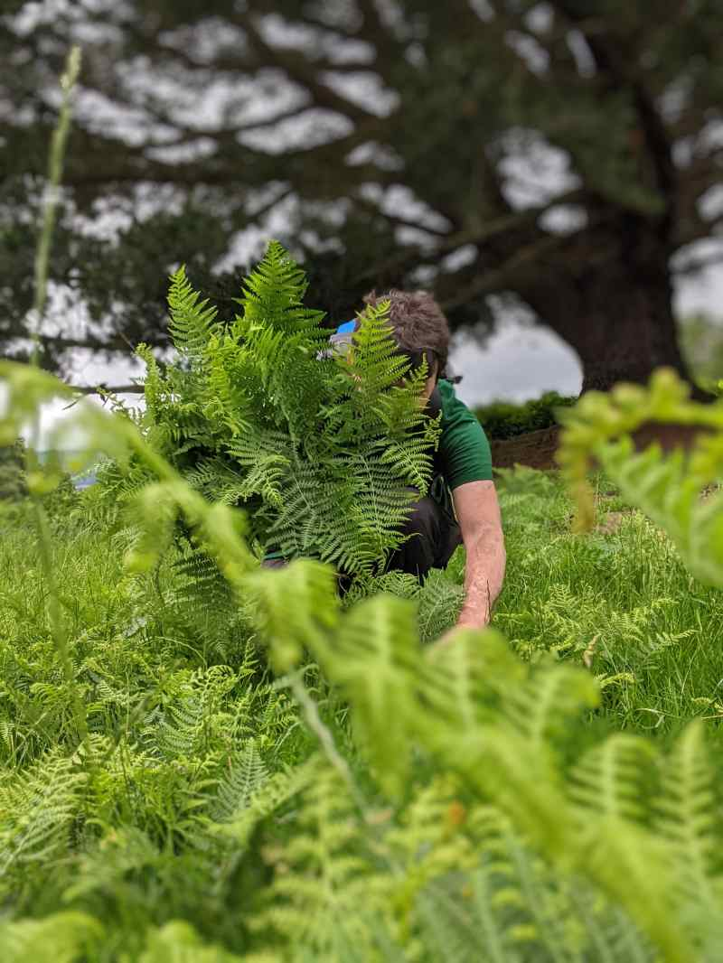 Collecting ferns for Gone Wild Festival activity