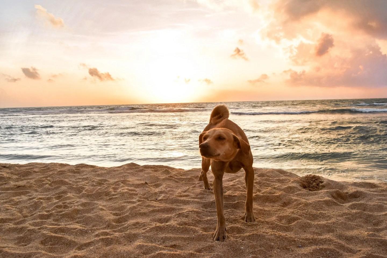 Wanderers & Warriors - Hikkaduwa Beach Sunset, Sri Lanka