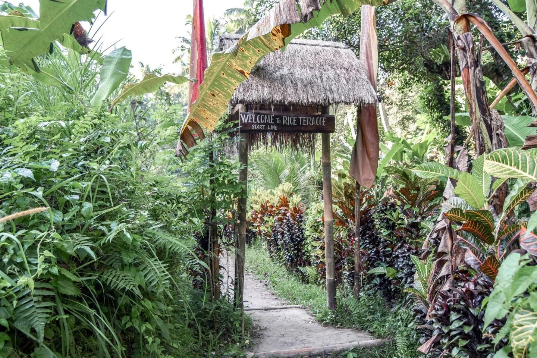 Wanderers & Warriors - The Magical Tegalalang Rice Terraces Ubud Bali - Tegalalang Rice Terrace - Tegalalang Rice Fields - Tegalalang Rice Terrace Entrance Fee