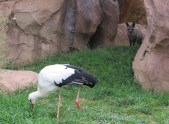 cropped-cheryl-bird.jpg