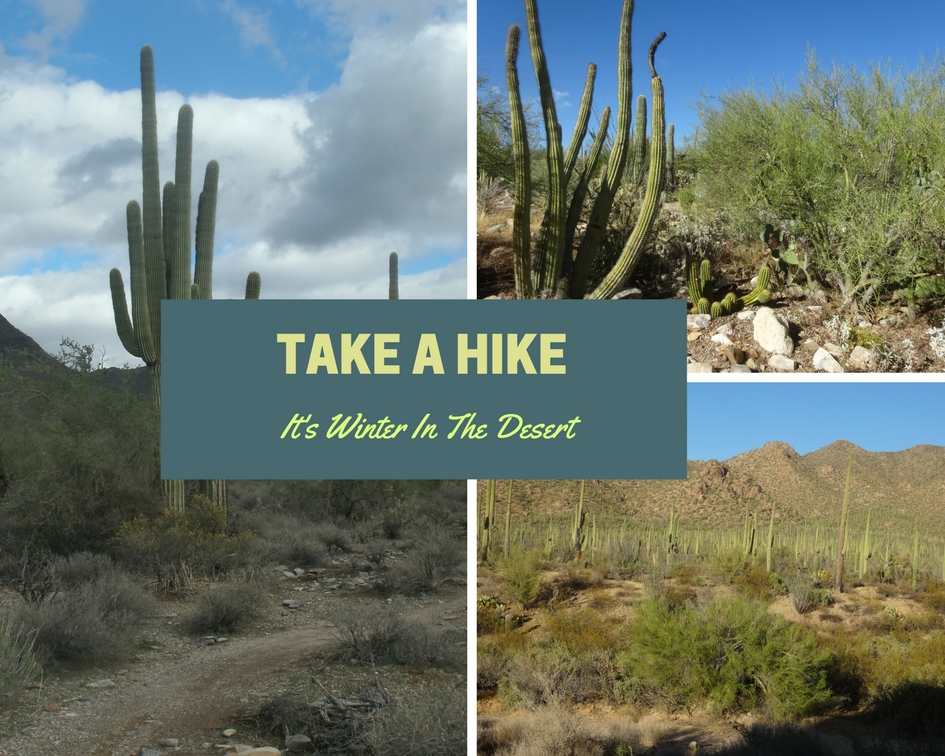 Take a Hike in the Desert in the Winter