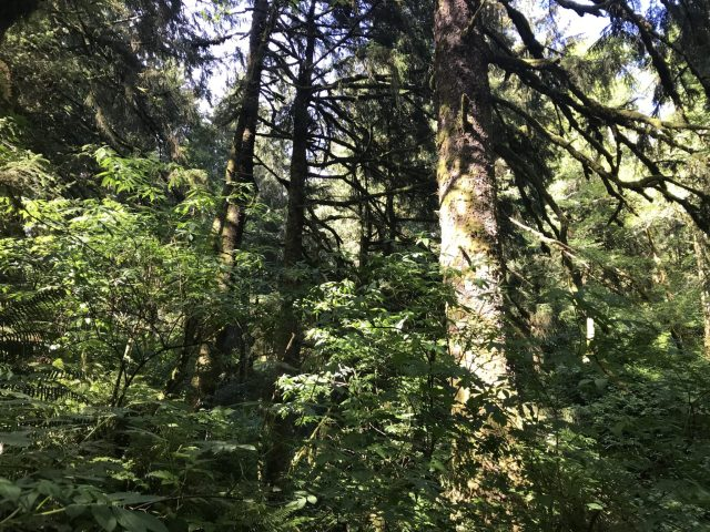 In the Forest... Oregon Coast