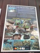 Explore Sabah Day 19: Bohey Dulang, Semporna - Action for Fish-bombed Reefs