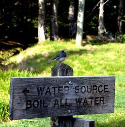A bird perched the sign pointing toward our water source