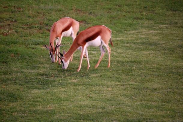 Springbok, South Africa
