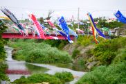 carp kites of various colors for children's day