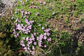 dynjandilovelyflowers_zpsaln8anwz