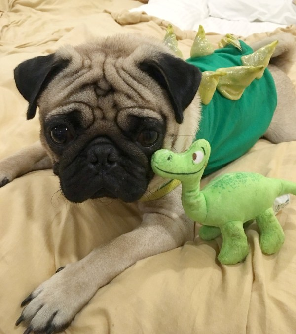 Jamba the Pug does not discriminate and makes friends with members of other species.