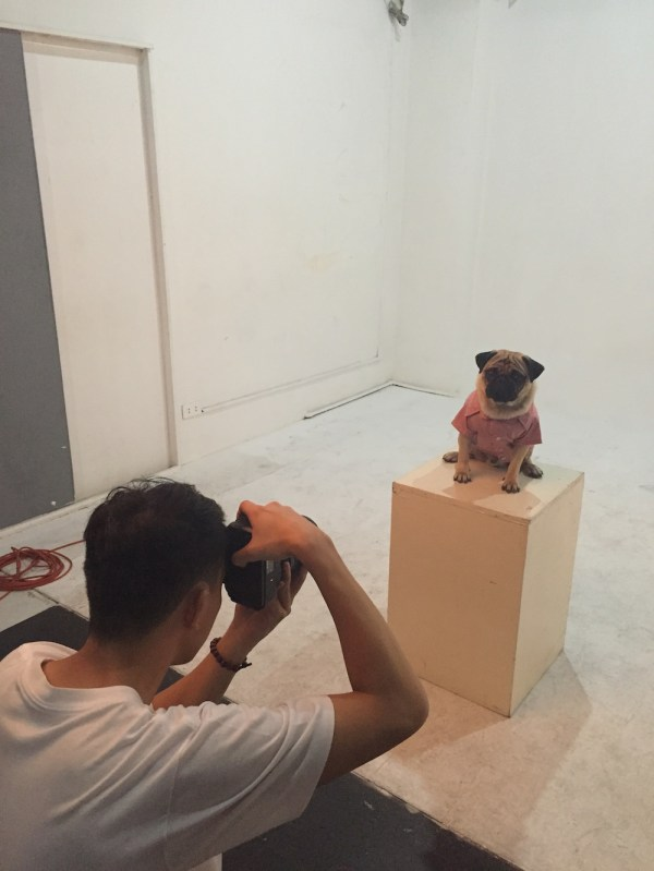 Jamba the Pug working as a dog clothes model.