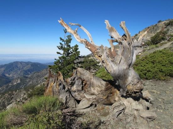 Matt Emerson WBNL Mt Baldy