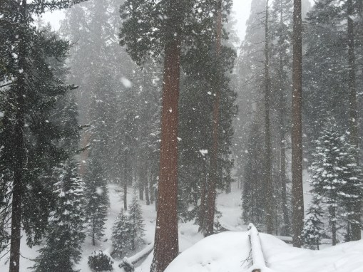 5 Wintertime Tips to Enhance Your Sequoia NP Visit