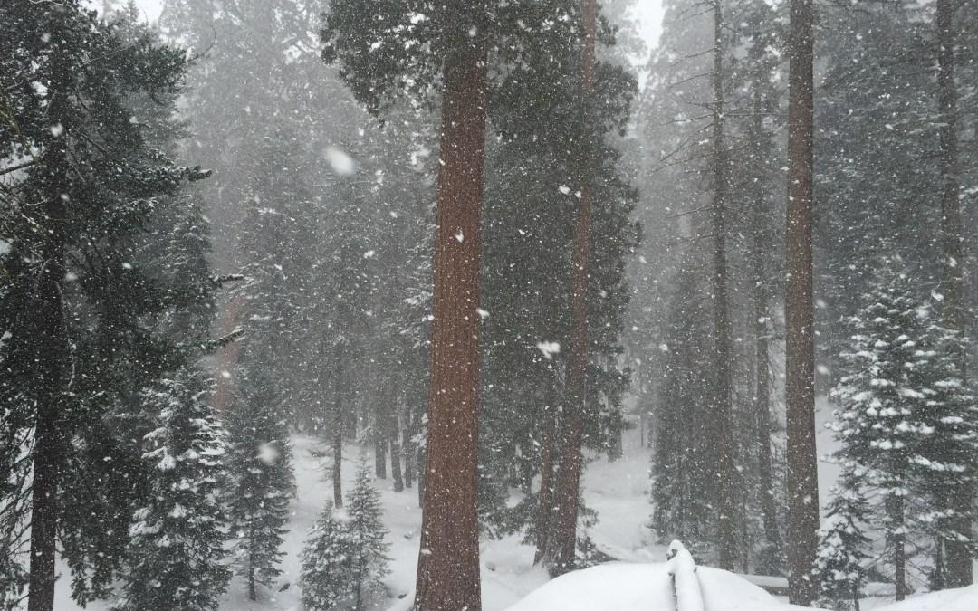 Sequoia NP ~ 5 Wintertime Tips