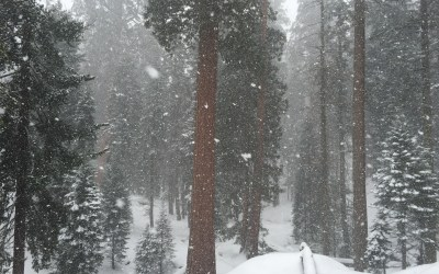 Sequoia NP ~ 5 Wintertime Tips