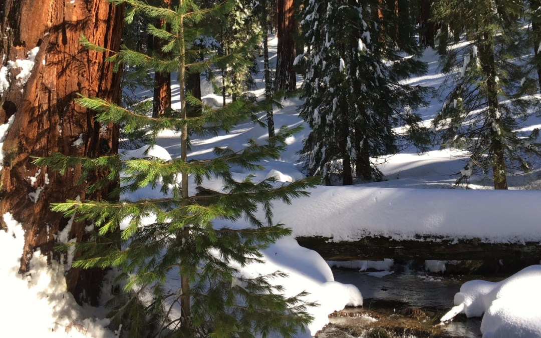 Sequoia National Park ~ A Winter Pictorial
