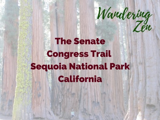 Wandering Zen – The Senate