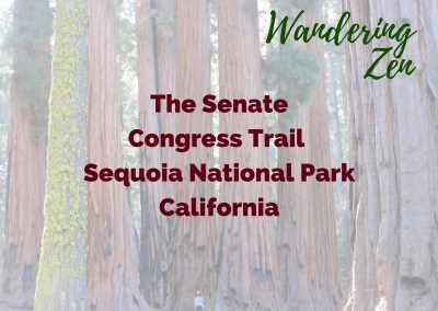 Wandering Zen – The Senate