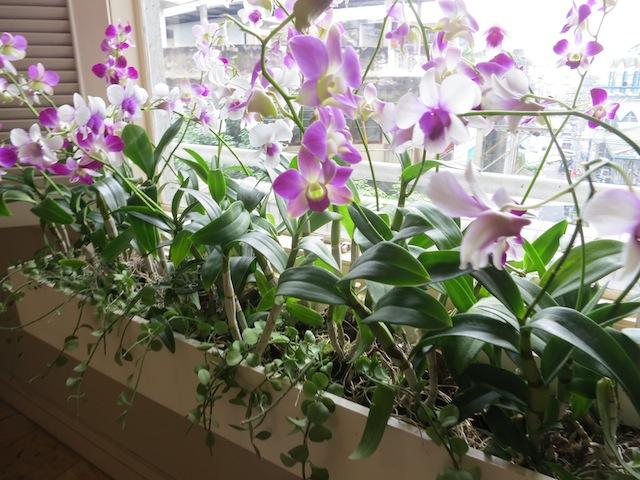 Flowers at Shangri-La Hotel Bangkok Thailand