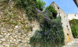 Flowers and stone walls in Biot South of France