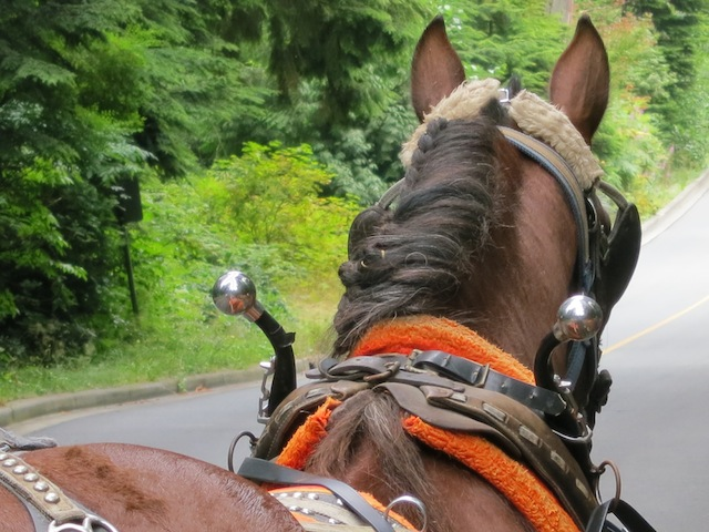 Horse drawn carriage ride in Stanley Park