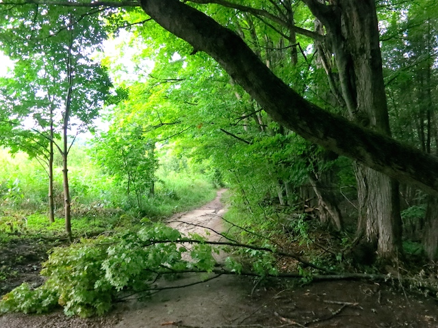Hike the Bruce Trail Mono Provincial Park, tree down