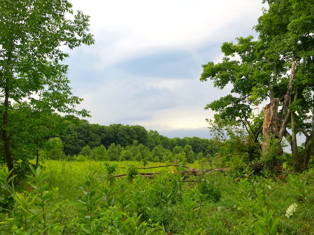 Hike the Bruce Trail from Mono Provincial Park north of Toronto