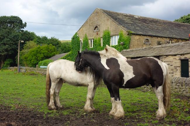 Horses at Holdsworth House