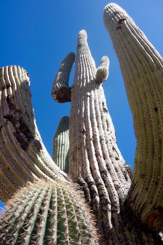 Scottsdale mountain biking Saguaro Cactus