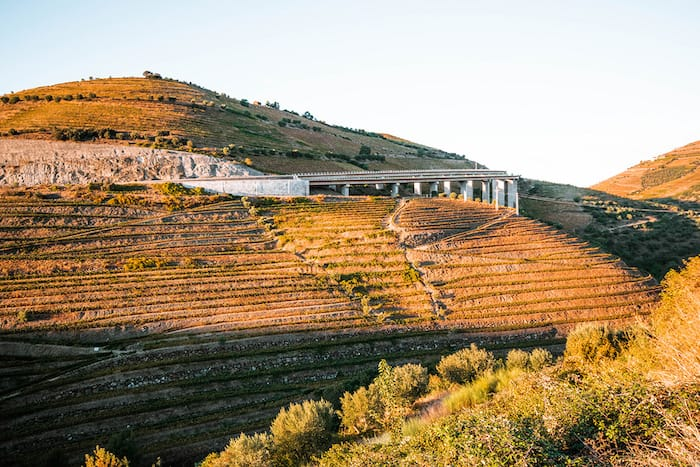 Vineyards clinging to steep slopes in the Douro Valley of Portugal
