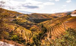 Vineyard and hills in the Douro Valley
