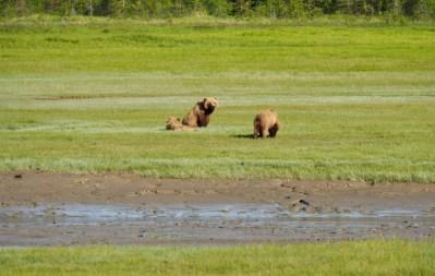 Alaska-brown-bear-viewing-chinitna-bay-Lake-Clark-National-Park-family