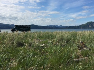 Bear Mountain Lodge Chinitna Bay Lake Clark National Park bear viewing