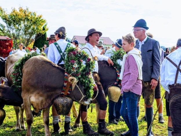 Cattle with floral headdress for Viehscheid in Haldenwang, Allgaü, Bayern, Germany