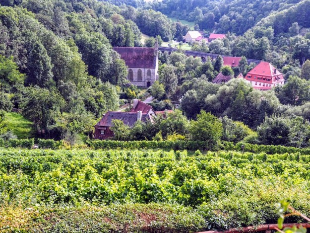 German wine vineyard Rothenburg ob der tauber