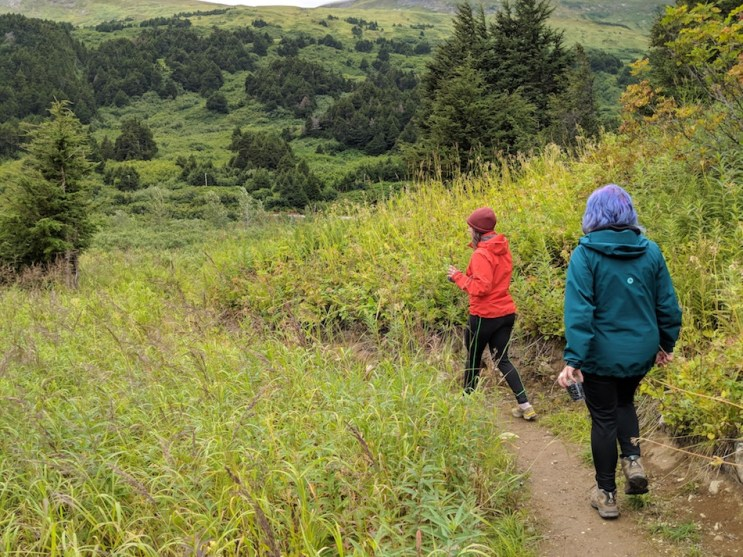 Outdoor activity anchorage berry picking