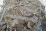 Fossils from the Devonian Fossil Gorge