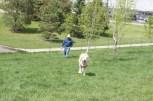 Blondie loved the city dog park!