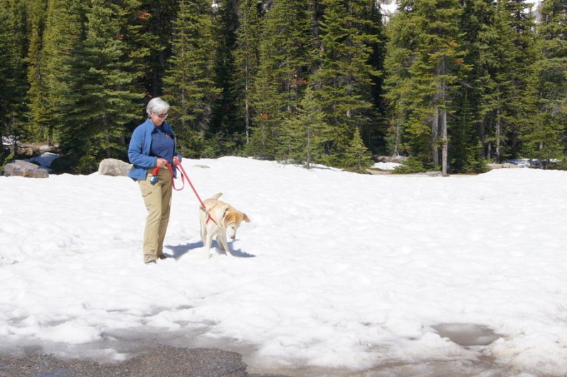 Snow covered the ground between the parking lot and the trail head for the Peyto Lake Hike
