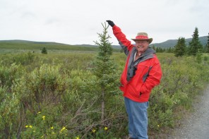 Henry with a young Sitka Spruce