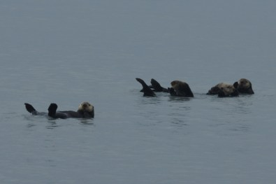 We stopped to watch the sea otters on our way out into the bay