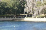 Fish jumping at Salt Springs, January, 2013