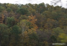 Fall Colors in central Missouri