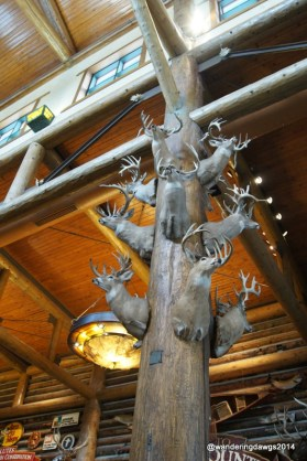 Display as you enter Bass Pro Shops
