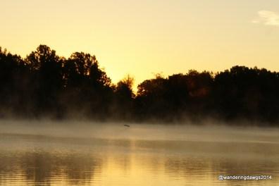 Heron flying over the Arkansas River at sunrise