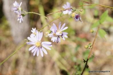 Wildflowers at Deerlick Creek